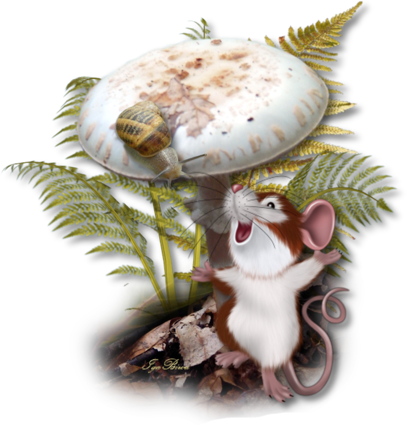 champignon de maison dangereux champignons lignivores e p h attention danger mortels ou. Black Bedroom Furniture Sets. Home Design Ideas