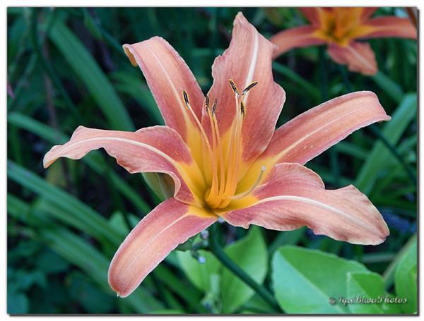 Fouillis de fleurs au jardin de michel centerblog for Fleurs au jardin