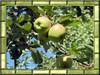 http://igabiwa.i.g.pic.centerblog.net/m/962701de.jpg